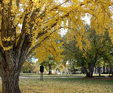 Wesleyan College Campus in Fall