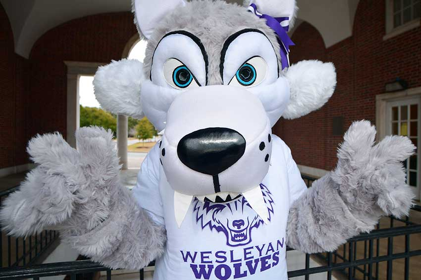 Wolf mascot looks into the camera.